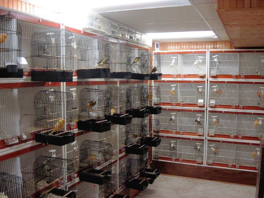 Yorkshires champion breeder exhibitor the bird room for Birdcage bedroom ideas